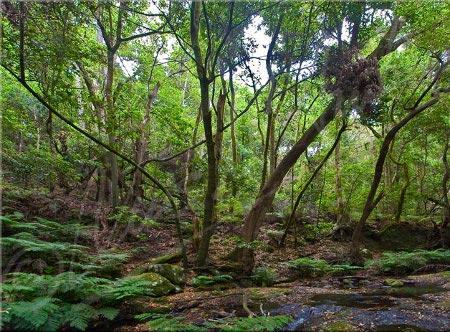 påsköns skogar 01
